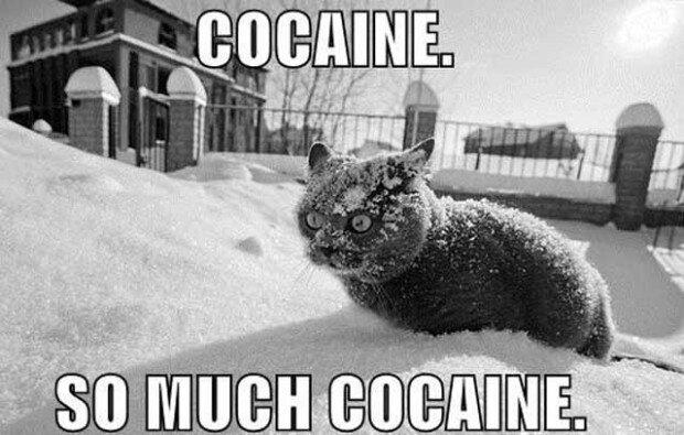 coke_cat_freak.jpg?w=720