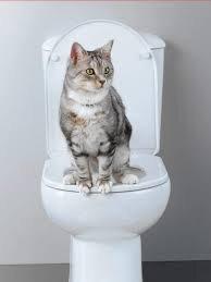 """Résultat de recherche d'images pour """"chat régresse"""""""