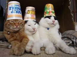 """Résultat de recherche d'images pour """"3 cats"""""""