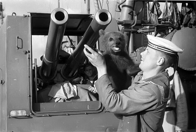 Bear mascot on the Soviet Svetlana-class cruiser Krasnyi Kavkaz [1199 x  808] - Album on Imgur
