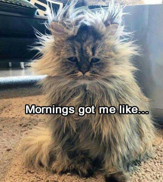 Morning cat | Cute funny animals, Baby animals funny, Funny animals