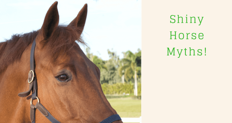 Shiny-Horse-Myths-e1519240100297.png?res