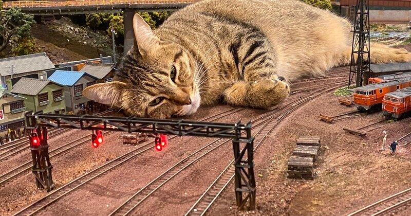 Cat-Osaka-1.jpeg?w=1200&h=630&crop=1