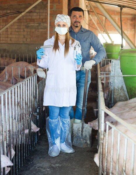 agriculteur-et-vétérinaire-dans-l-étable-de-porc-94820719.jpg