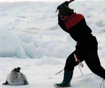 Seal-Clubber.jpg